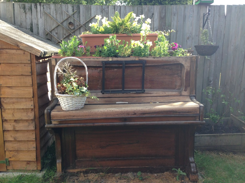 Becky's piano in bloom
